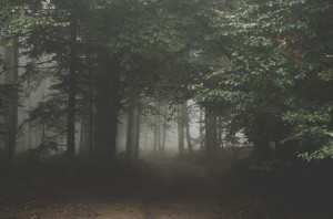 forest-1031022_640