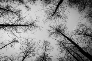 forest-581256_640